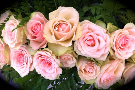 The Queen's roses