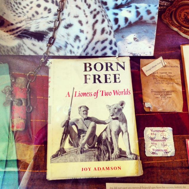 Joy's camp (named after Joy Adamson, wildlife behavioralist) Shaba National Game Reserve