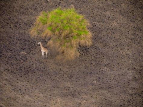 WILDLIFE SOUTH SUDAN